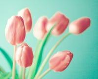 Roczników Różowi tulipany Obraz Royalty Free