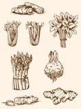 Roczników warzywa Obraz Royalty Free