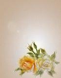 Rocznik białe i żółte stylowe róże Fotografia Royalty Free