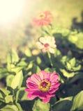Rocznik cyni kwiat, tło Zdjęcie Royalty Free