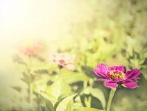 Rocznik cyni kwiatu tło Zdjęcia Royalty Free