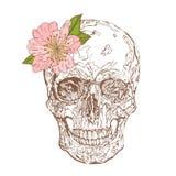 Rocznik czaszka z różową peonią na białym tle Wektorowa czaszka dla druku, emblemat, koszulka projekt, karty, etykietki ilustracji