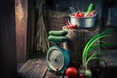 Rocznik drewniana piwnica z świeżymi ziele i warzywami Zdjęcia Stock