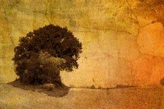 rocznik drzewny Obrazy Royalty Free