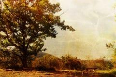 rocznik drzewny Zdjęcia Stock