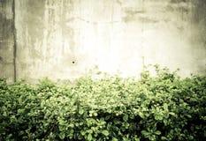 Rocznik filtrujący: Zielony liścia krzak i mały biały kwiat przy przeciwem Fotografia Royalty Free
