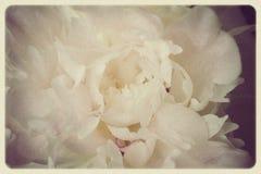 Rocznik fotografia biały pion z adrą Zdjęcia Royalty Free