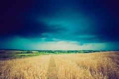 Rocznik fotografia burz chmury nad pszenicznym polem Obraz Royalty Free