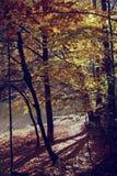 Rocznik fotografia jesieni sceneria Zdjęcia Stock