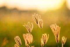 Rocznik fotografia zakończenie w górę miękkiej ostrość dzikich kwiatów trawy troszkę Fotografia Stock