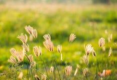 Rocznik fotografia zakończenie w górę miękkiej ostrość dzikich kwiatów trawy troszkę Zdjęcia Stock