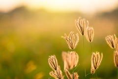 Rocznik fotografia zakończenie w górę miękkiej ostrość dzikich kwiatów trawy troszkę obrazy royalty free
