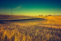 Rocznik fotografia zmierzch nad kukurydzanym polem przy latem Zdjęcie Stock