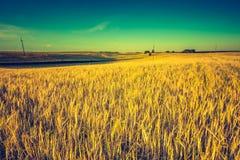 Rocznik fotografia zmierzch nad kukurydzanym polem przy latem Zdjęcie Royalty Free