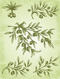 Rocznik gałązka oliwna Zdjęcie Royalty Free