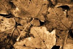 rocznik jesieni Zdjęcia Royalty Free