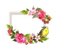 Rocznik karta róże, kwiaty, jagody i ptak -, Akwareli rama dla twój teksta Zdjęcia Royalty Free