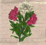 Rocznik karta z peoniami Zdjęcie Royalty Free