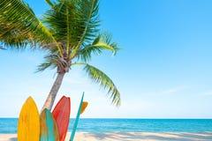 Rocznik kipieli deska z drzewkiem palmowym na tropikalnej plaży zdjęcie stock