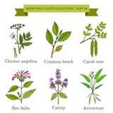 Rocznik kolekcja medyczni ziele i rośliny Zdjęcie Royalty Free