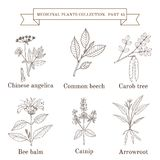 Rocznik kolekcja medyczni ziele i rośliny Zdjęcie Stock