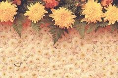 Rocznik kwiatu tło Fotografia Stock