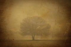 Rocznik mgły drzewo Zdjęcie Royalty Free
