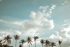 Rocznik natury krajobraz kokosowy drzewko palmowe na tropikalnym plażowym niebieskim niebie z chmurami w lecie, zdjęcie royalty free