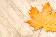 Rocznik opuszcza na drewnianym stołowym wierzchołku, sezonowy pojęcie fotografia royalty free