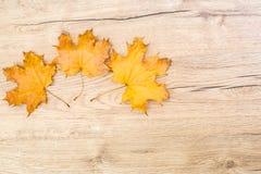 Rocznik opuszcza na drewnianym stołowym wierzchołku, sezonowy pojęcie obraz stock