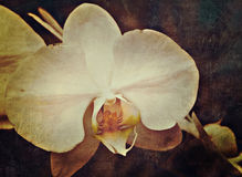 Rocznik orchidea zdjęcie stock