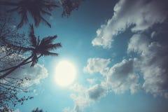 Rocznik palma na nieba tle z chmurami Obraz Stock
