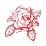 Rocznik ręka rysująca wzrastał również zwrócić corel ilustracji wektora Obrazy Royalty Free