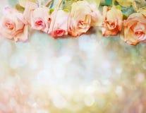 Rocznik róże Zdjęcie Stock