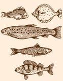 Rocznik ryba Obrazy Stock