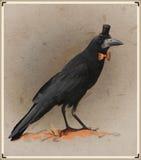Rocznik stylowa fotografia ubierająca wrona Obrazy Royalty Free