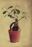 Rocznik szpilka z dekoracyjnym drzewem ilustracja wektor
