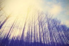 Rocznik tonujący pokojowy las z winieta skutkiem Zdjęcia Royalty Free