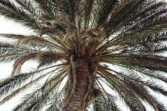 Rocznik zamknięty drzewko palmowe abstrakta krajobrazu tło up - Zdjęcie Royalty Free