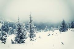 Rocznik zimy krajobraz Fotografia Royalty Free