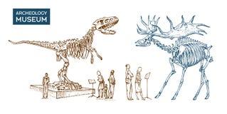 Rocznika Archeologiczny muzeum Goście są przyglądający eksponat Dziejowy kościec wymarły zwierzęcy dinosaur ilustracji