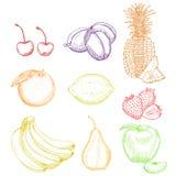 Rocznika atramentu ręka rysująca kolekcja cytrus owoc ilustracji
