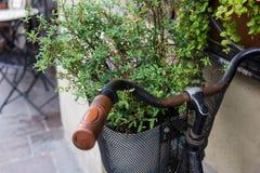 Rocznika bicykl z pikantności rośliną Obrazy Stock