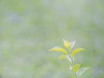 Rocznika brzmienie roślina i rozmyty natury tło Obraz Stock