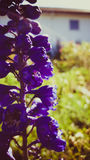 Rocznika daffodil Obrazy Royalty Free