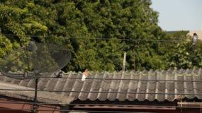 Rocznika domu Drewniany dach zdjęcie royalty free