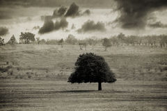 Rocznika drzewo Obrazy Royalty Free