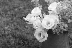 Rocznika dzbanek białe preryjne gencjana na trawie zdjęcia royalty free