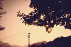 Rocznika filtr: sylwetka zmierzch scena z drzewem przy strony ro Obraz Royalty Free