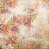 Rocznika Grunge tła jesień 141 Zdjęcia Royalty Free
